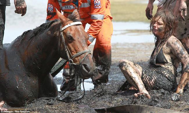 Sauvetage d'un cheval NYG7La7h