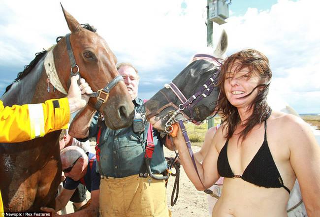 Sauvetage d'un cheval VZt0X44h