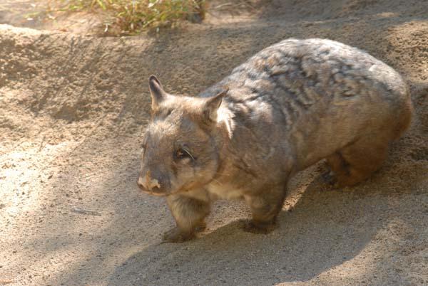 Animal de ptit loulou - 7 décembre trouvé par Lolo Wombat