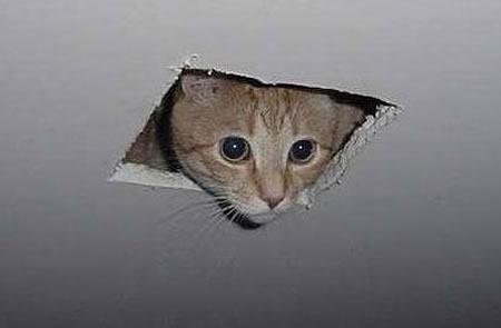 """C'est quoi cette """"chose""""? Ceiling-cat-uncaptioned1"""
