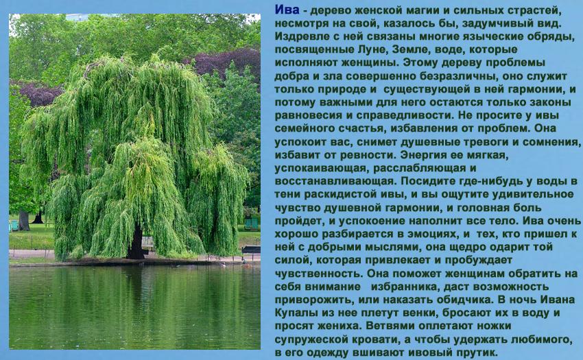 гороскопдруидов - Магические свойства деревьев. Магия деревьев. Деревья в магии. 90265251
