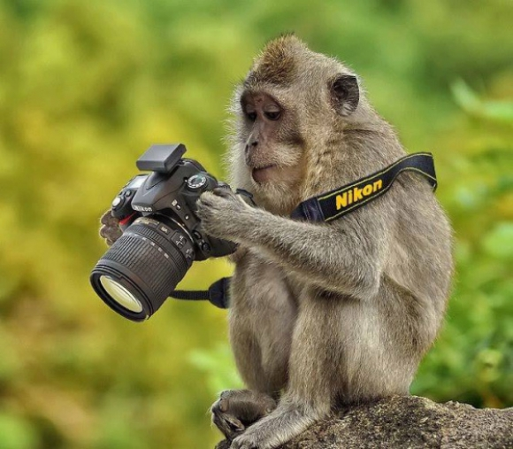 Fotografías espectaculares  - Página 3 Kafshet-me-aparat-fotogr