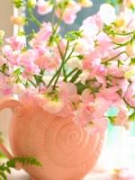 Аватары с цветами Thumbs_vesennie-cvety-6