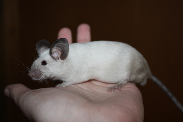 Some of my mice IMG_5032