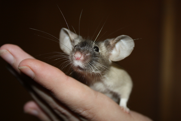 Some of my mice IMG_5070