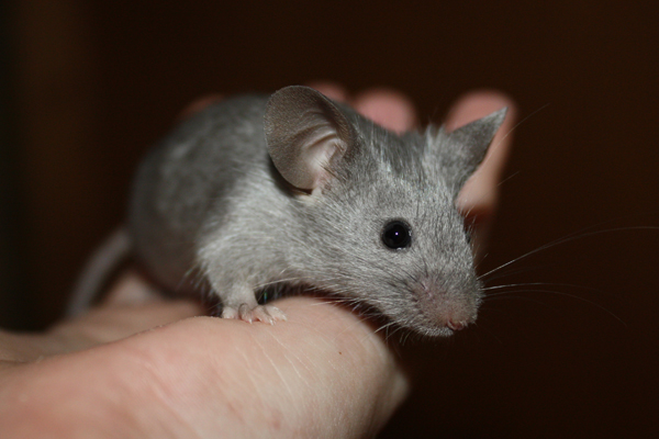 Some of my mice IMG_5088