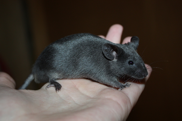 Some of my mice IMG_5106