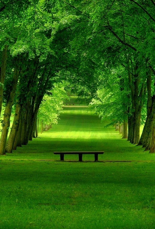 ...El color de la naturaleza... - Página 2 B6bda8487fd986e055528ced69605125