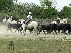 les équitations de travail et de traditions Etalons_2006_tri