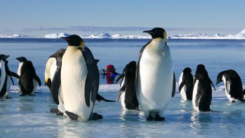Protégeons baleines, manchots et phoques en Antarctique 3770500331