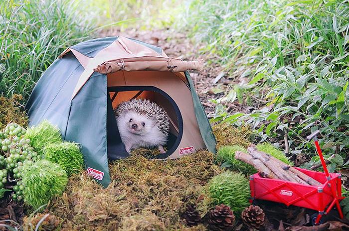 Titula la novela a partir de la imagen - Página 2 Camping-erizo-fb