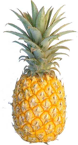 Picture Guessing Game! - Page 3 Pineapple