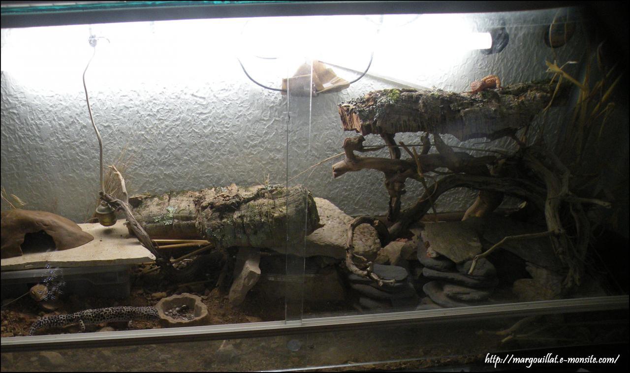 Quelques terrariums pour geckos léopards Dscn4653