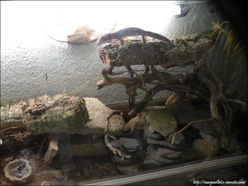 Quelques terrariums pour geckos léopards Em2-1