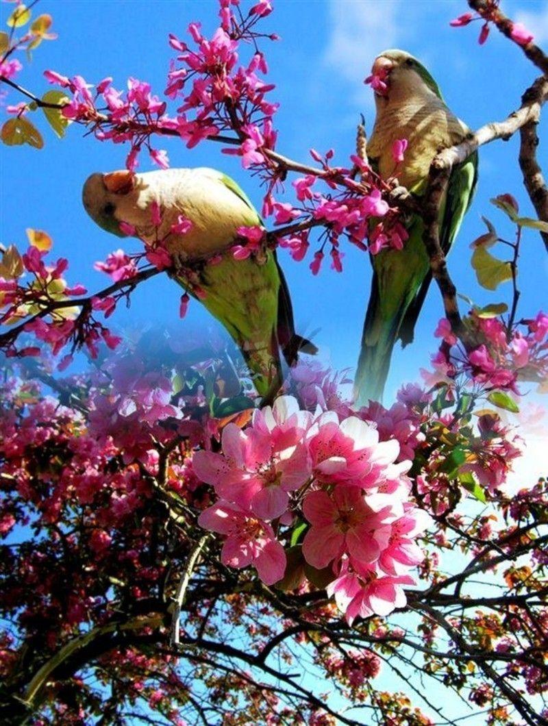 Bon Lundi Oiseaux-printemps-06-3-12