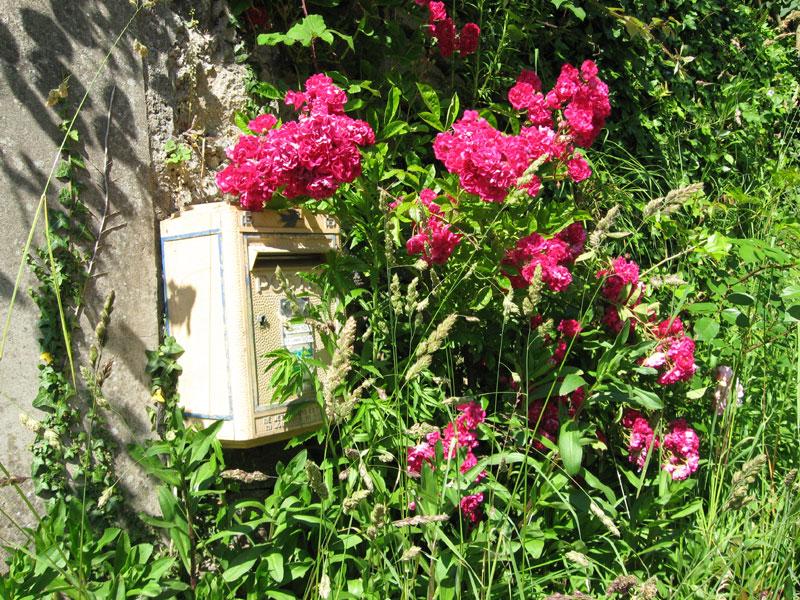 LANVEZEAC / Lanvizeg Lettres-roses1-160608