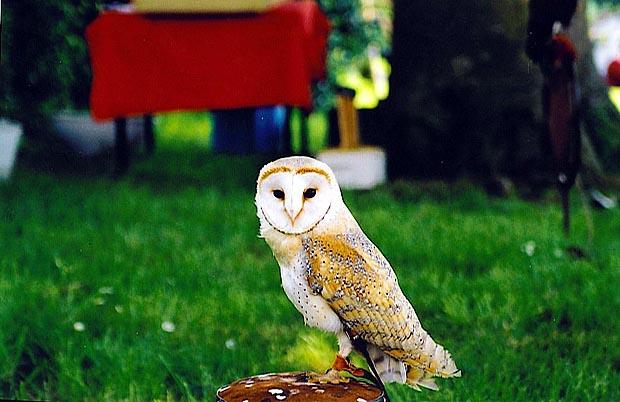 Les noms d'oiseaux (animaux à plumes) Chefdubois2003-chouette