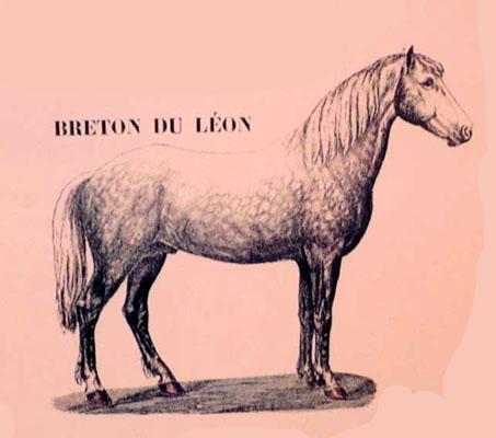 Cheval / Marc'h / Horse Cheval-breton-leon5623