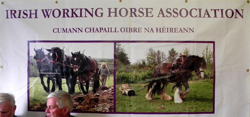 Cheval / Marc'h / Horse Cheval-labour-irlandais1