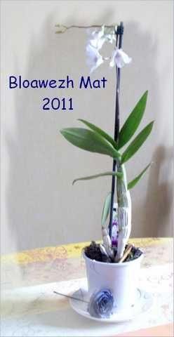 Meilleurs voeux Bloawezh-mat001