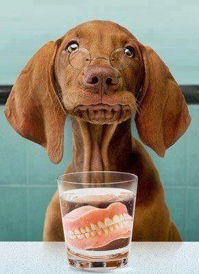 Enlever toutes les dents d'un chien agressif - Page 2 466e3e5b