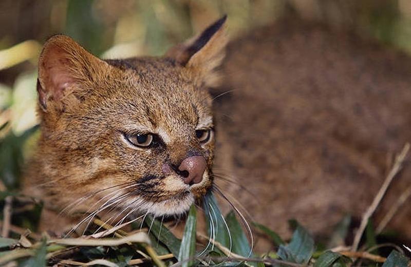 un animal par blucat - 30 août trouvé par ajonc  Colocolo1