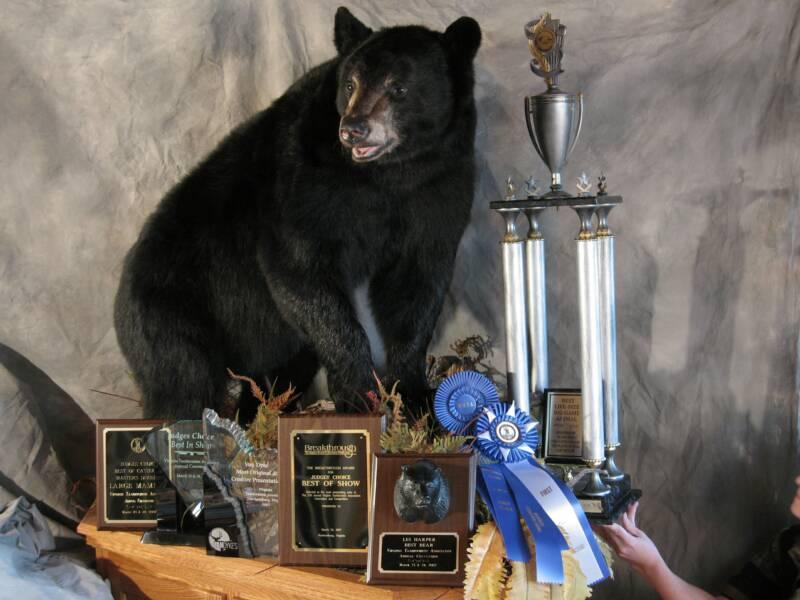 Mõista-mõista, mis lõng see on? kuni 4 aprill (võitja on Katsumõmmi) Tims_bear_with_awards1.jpg