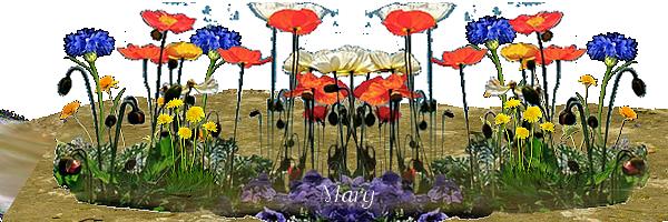 Mercredi 6 août Fleur-des-champs