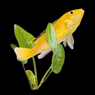 Les poissons en général 55873d86