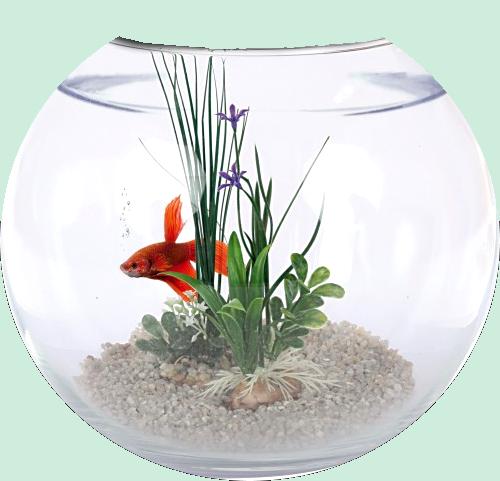 Les poissons en général 57b415ff