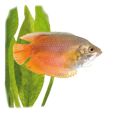 Les poissons en général A4e0d395