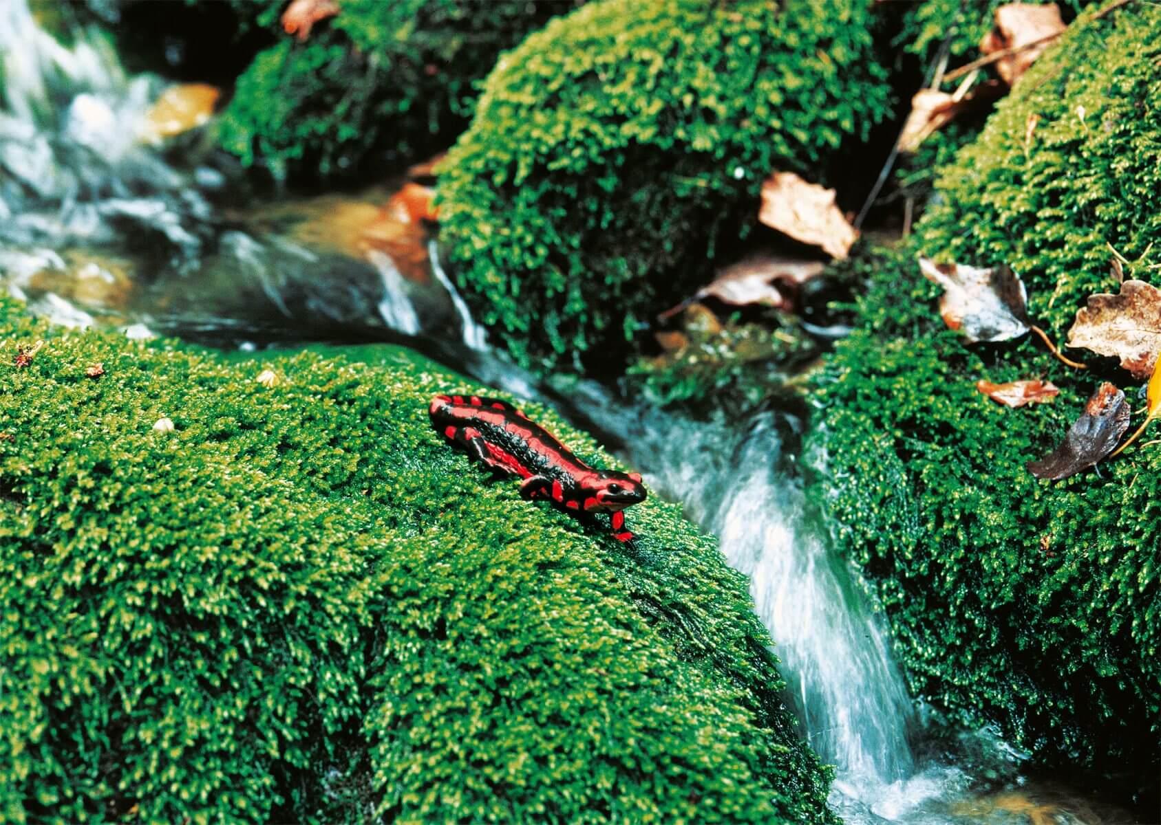 [Jeu] Association d'images - Page 18 Quand-les-couleurs-semblent-ireelles-salamandre-1687x1200