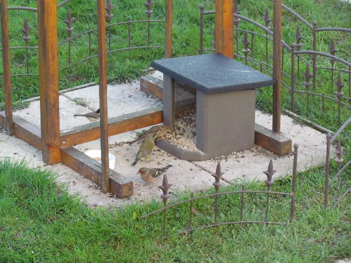 Visiteurs du jardin - Page 3 Nouvelle%20mangoire