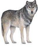 Rébus pour jouer un peu Loup