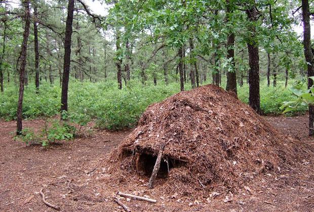 Preživljavanje u prirodi - Page 2 Emergency-survival-debris-shelter