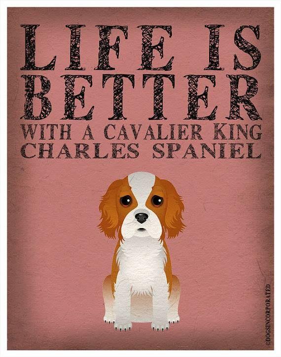 Le Cavalier King Charles Spaniel 2c4e996fc3b1414a31485de6e9be674d
