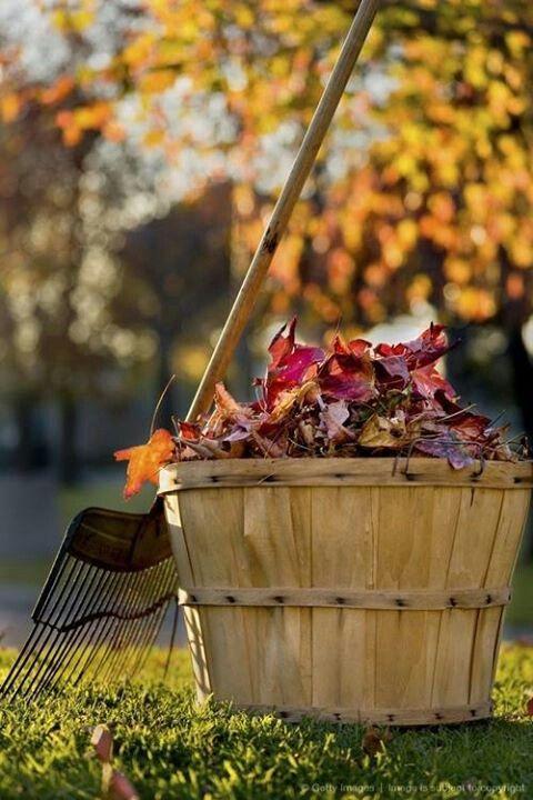 ... Y caen las hojas, llega ....¡¡¡ EL Otoño !!! - Página 3 45f863bac50e94df866f82c7fe17b0db