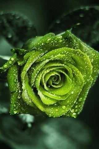 Volim zeleno - Page 6 5aed4de1745da1508ca5e05f9edaaf75