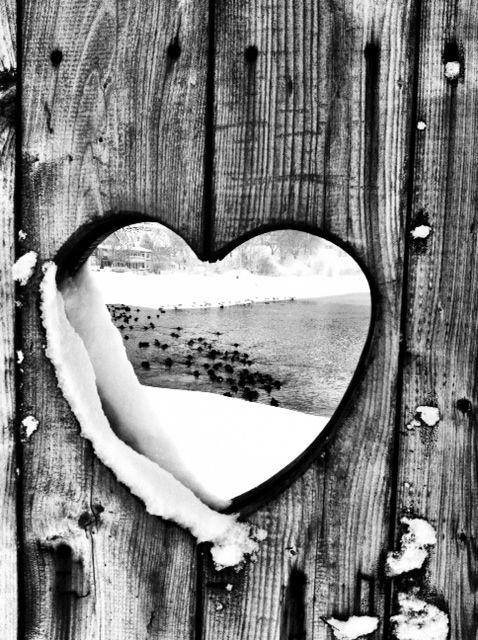 Srce srcu - Page 2 892e36d747014a6871c380ac48392afd