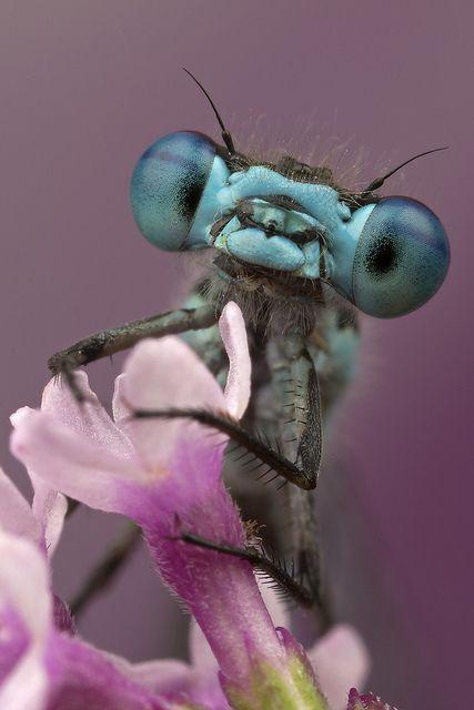 Fantastični insekti - Page 7 B2b08cff3289e0fbe965740b052bb6f3
