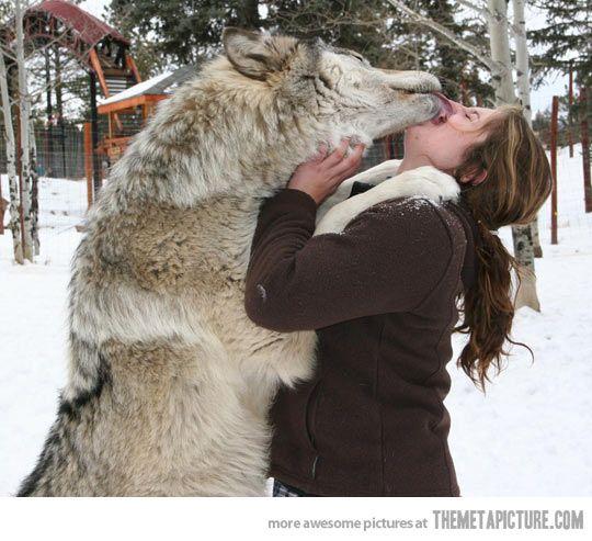 woman and wolf Cfc6d40a6ddbb567a22ed51ba6793a35