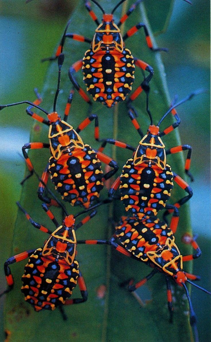 Fantastični insekti - Page 5 Fc92a9d7b13551dc529945f3b5547001
