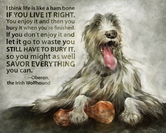 L'Irish Wolfhound 224f383f13ea6c935ec69a31f1753b2b