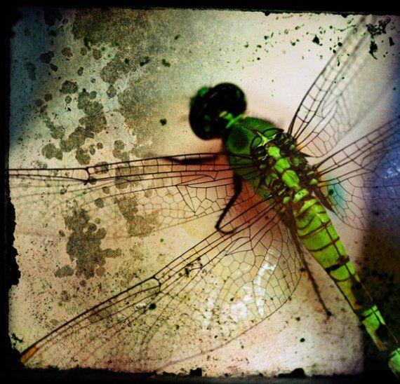 Fantastični insekti - Page 5 2260e415159d904162fd901eabc39f2e