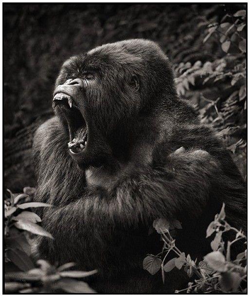 Zoo svaštara - Page 11 A1cbf7dae04011475f33a5ebc2ca20cb