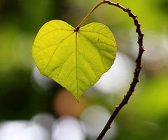 Beauty in nature - elegant, simple, delicate, artistic.