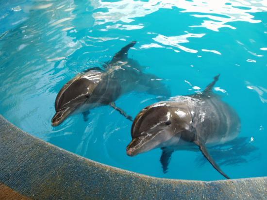معلومات عن الدلافين Cici-water-park-dolphins