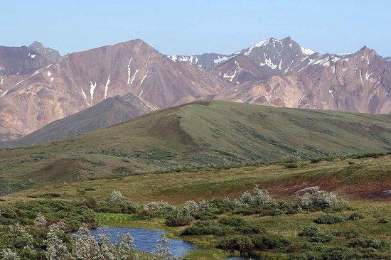 Reserva Denali Beauty-of-the-tundra