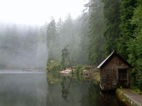 الغابه السوداء في المانيا Black-forest-glaswaldsee