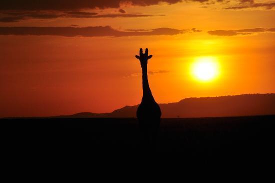 FOTO TË MUAJIT SHTATOR Maasai-mara-national